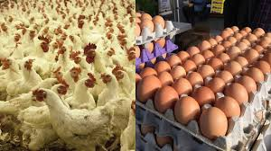 Poultry Business Plan for Layers in Nigeria