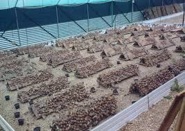 Start A Snail Farming Business Plan In Nigeria