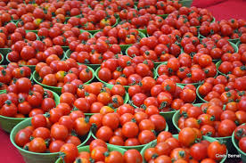Tomatoes Farming in Nigeria Business Plan