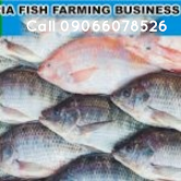 Fish Farming Business Plan In Nigeria 2020 And Feasibility Study Report
